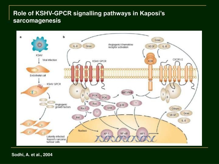 Role of KSHV-GPCR signalling pathways in Kaposi's sarcomagenesis