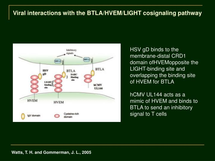 Viral interactions with the BTLA/HVEM/LIGHT cosignaling pathway