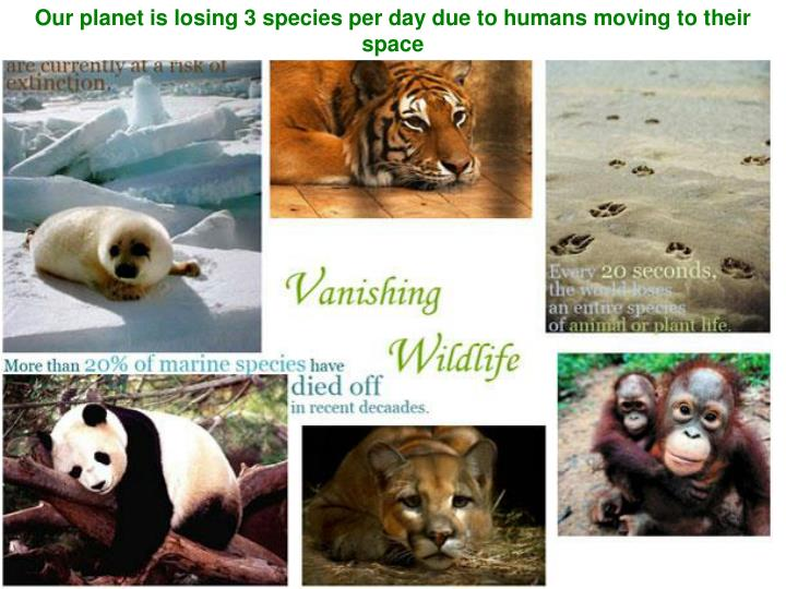 Our planet is losing 3 species per day due to humans moving to their space