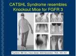 catshl syndrome resembles knockout mice for fgfr 3