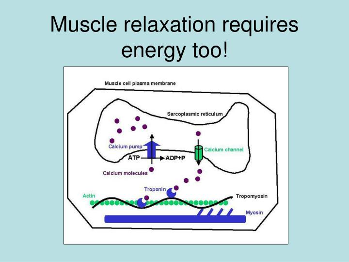 Muscle relaxation requires energy too!