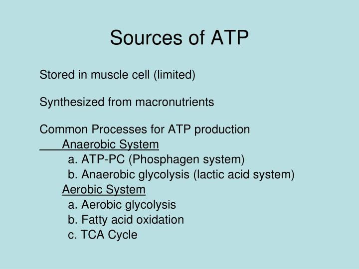 Sources of ATP