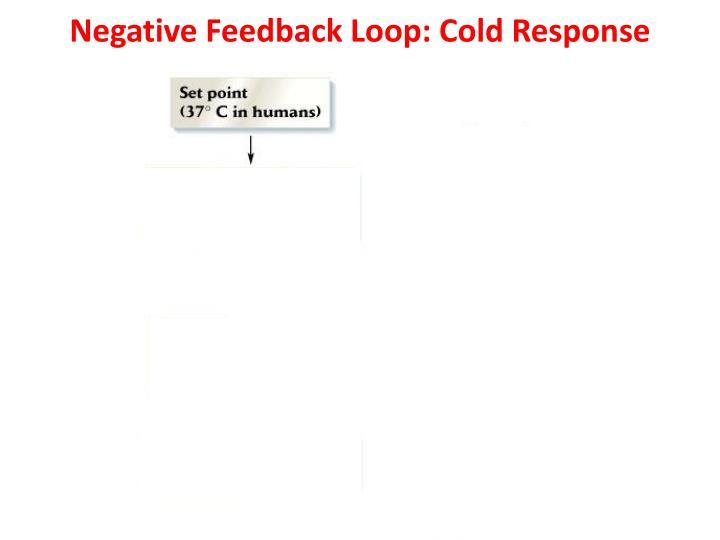 Negative Feedback Loop: Cold Response
