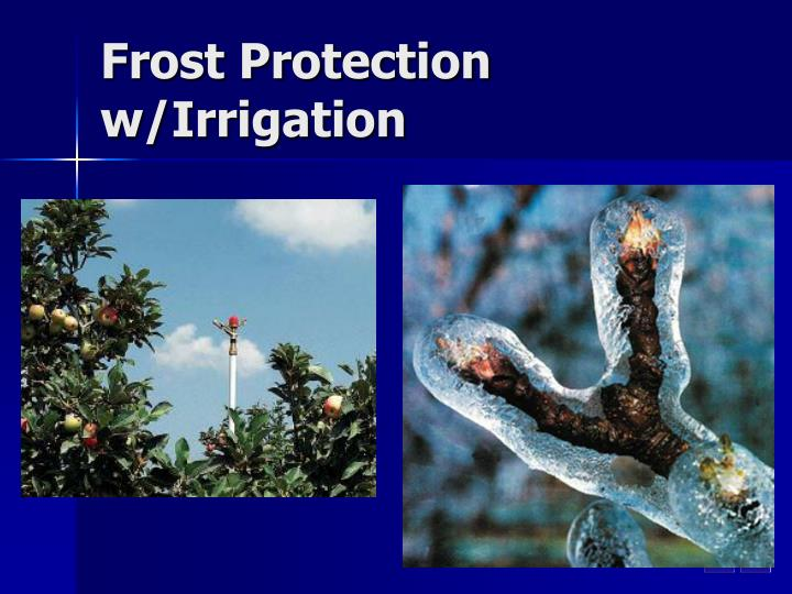 Frost Protection w/Irrigation