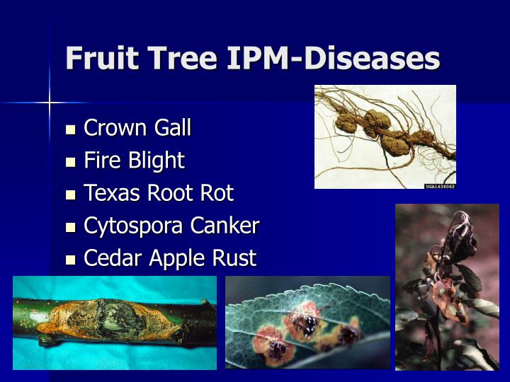Fruit Tree IPM-Diseases