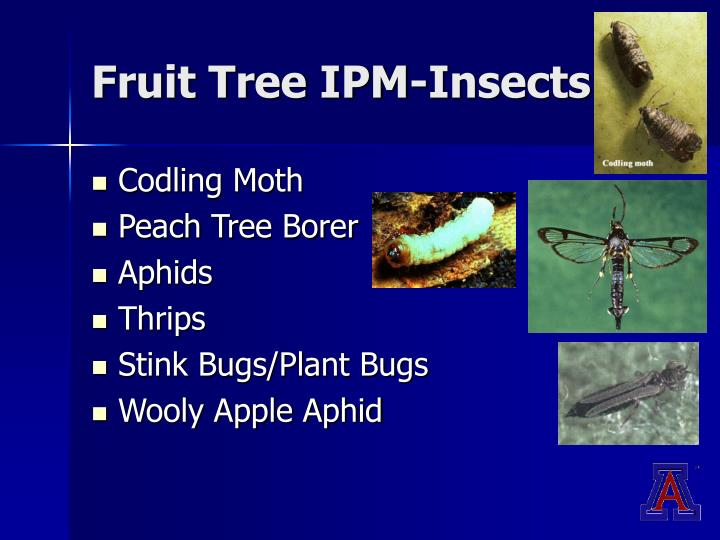 Fruit Tree IPM-Insects