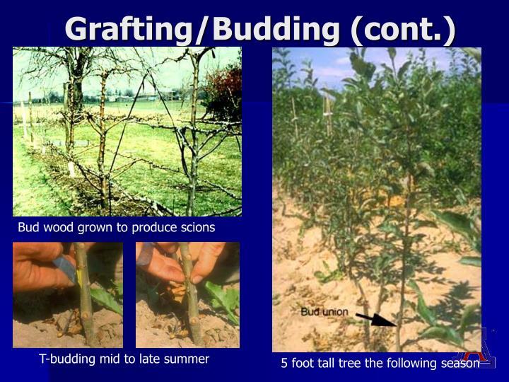 Grafting/Budding (cont.)