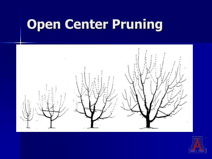 Open Center Pruning
