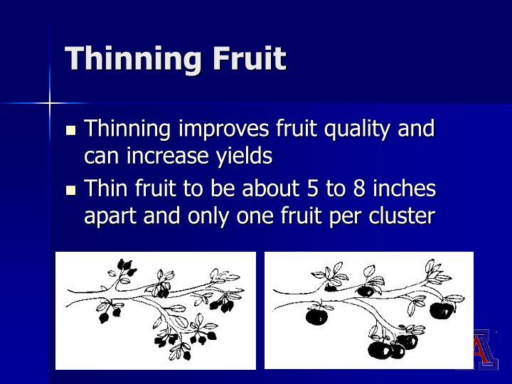 Thinning Fruit