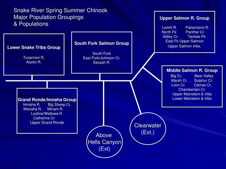 Snake River Spring Summer Chinook