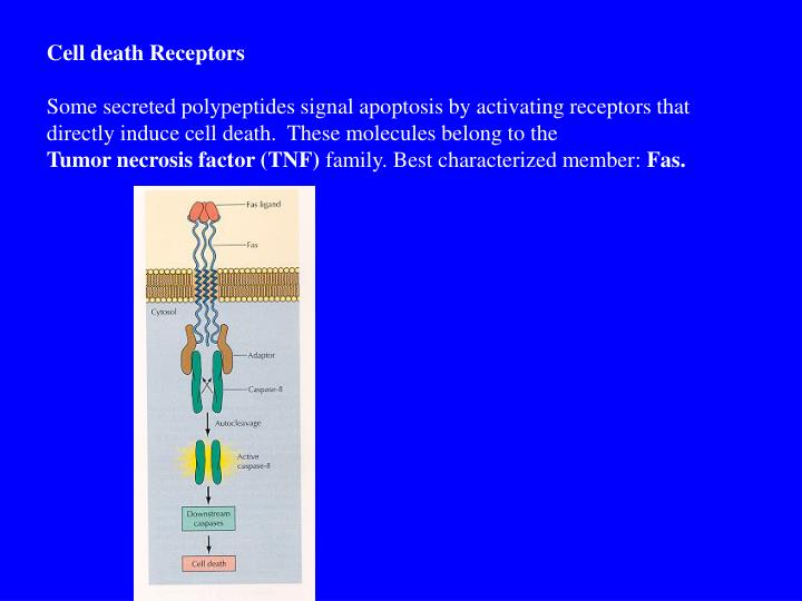 Cell death Receptors