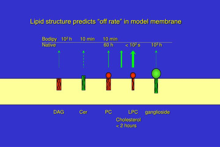 """Lipid structure predicts """"off rate"""" in model membrane"""