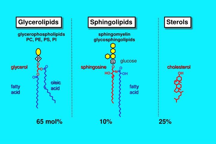 Glycerolipids