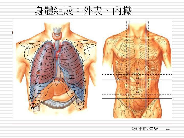 身體組成:外表、內臟