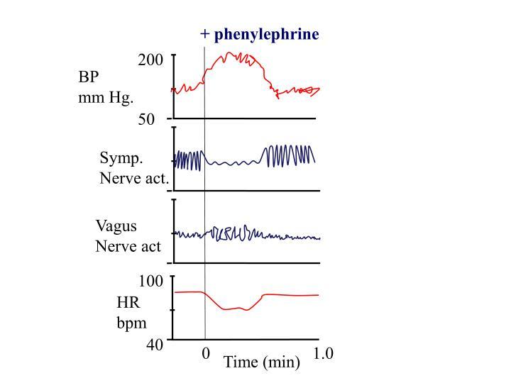 + phenylephrine
