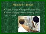 mamm o breast
