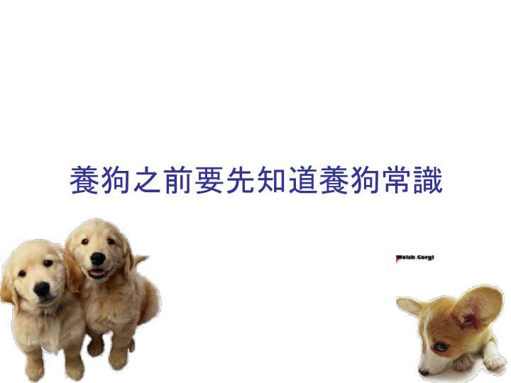 養狗之前要先知道養狗常識