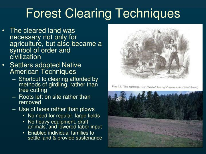 Forest Clearing Techniques