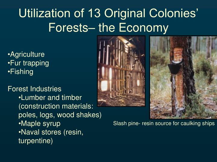 Utilization of 13 Original Colonies' Forests– the Economy