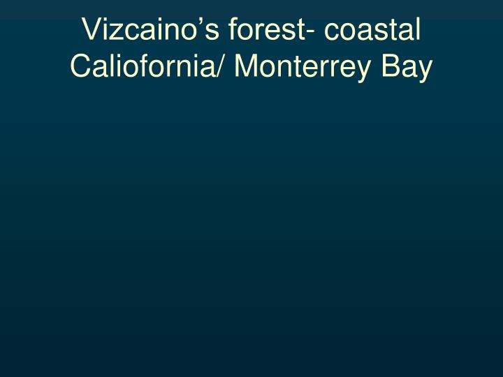 Vizcaino's forest- coastal Caliofornia/ Monterrey Bay