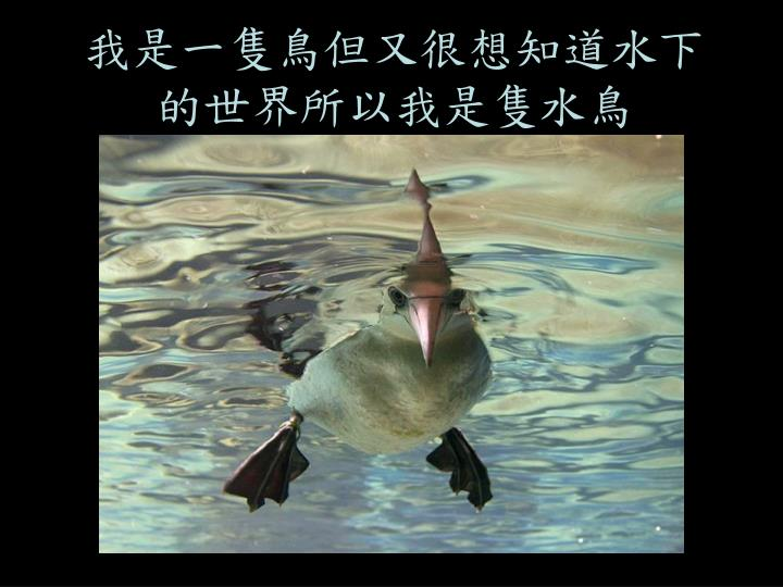 我是一隻鳥但又很想知道水下的世界所以我是隻水鳥