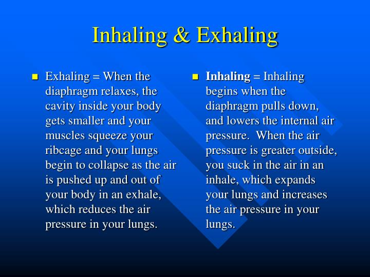Exhaling = When the diaphragm relaxes, the cavity inside your body gets smaller and your muscles squeeze your ribcage and your lungs begin to collapse as the air is pushed up and out of your body in an exhale, which reduces the air pressure in your lungs.