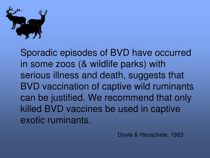Sporadic episodes of BVD have occurred in some zoos (& wildlife parks) with serious illness and death, suggests that BVD vaccination of captive wild ruminants can be justified. We recommend that only killed BVD vaccines be used in captive exotic ruminants.