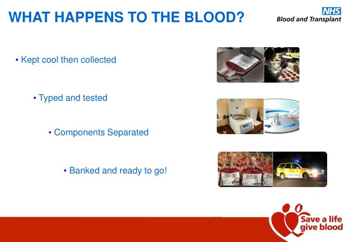 WHAT HAPPENS TO THE BLOOD?