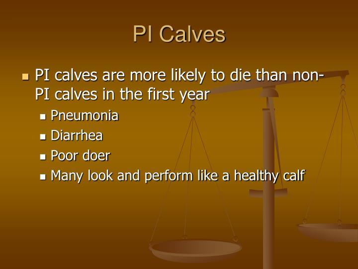 PI Calves