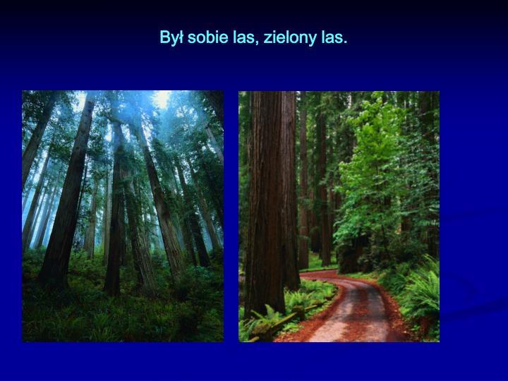 By sobie las zielony las