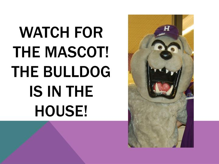 Watch for the Mascot!  The bulldog is in the house!