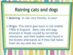 raining cats and dogs1