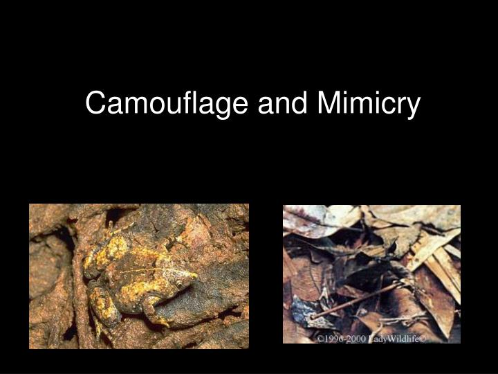 camouflage and mimicry n.