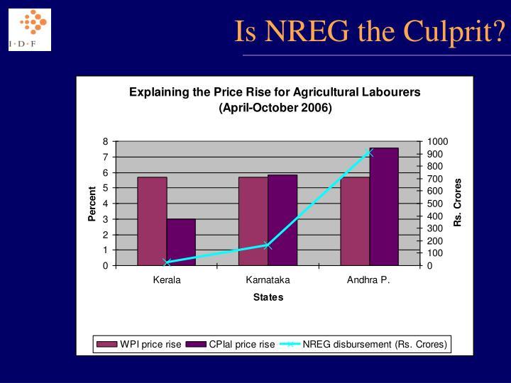 Is NREG the Culprit?