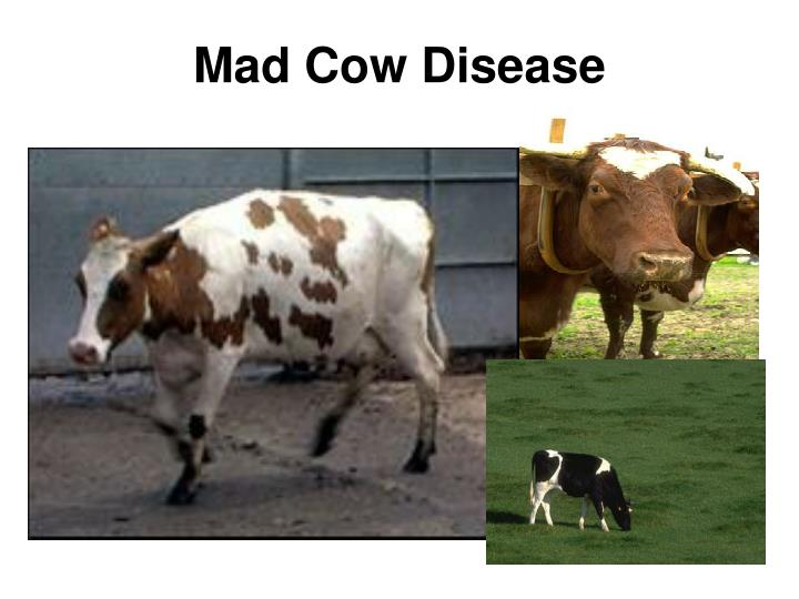 Mad cow disease