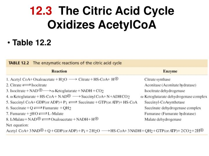 12 3 the citric acid cycle oxidizes acetylcoa n.