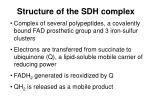 structure of the sdh complex