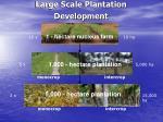 large scale plantation development
