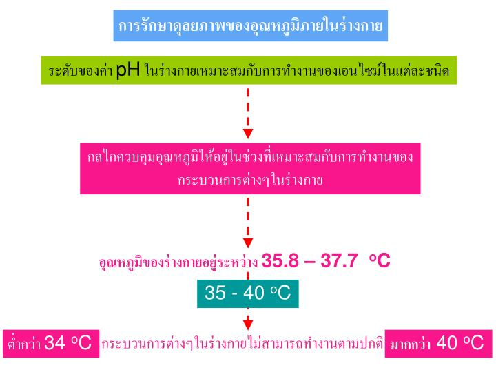 การรักษาดุลยภาพของอุณหภูมิภายในร่างกาย