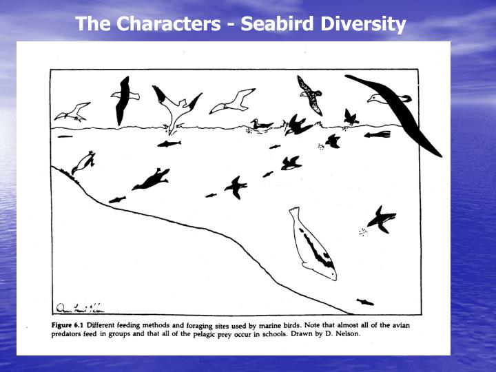 The Characters - Seabird Diversity