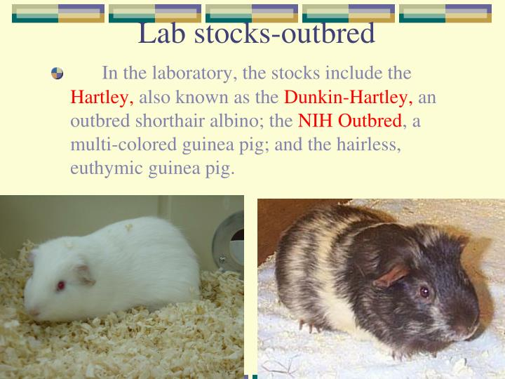 Lab stocks-outbred