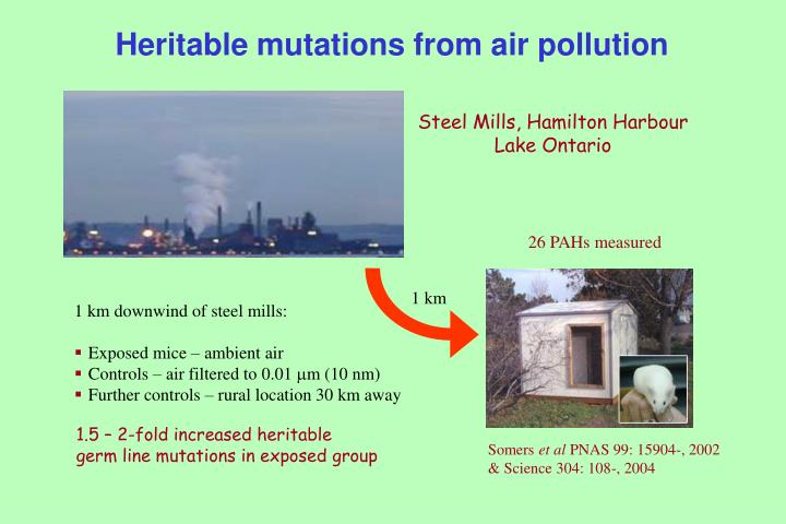Heritable mutations from air pollution