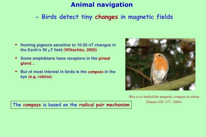 Animal navigation