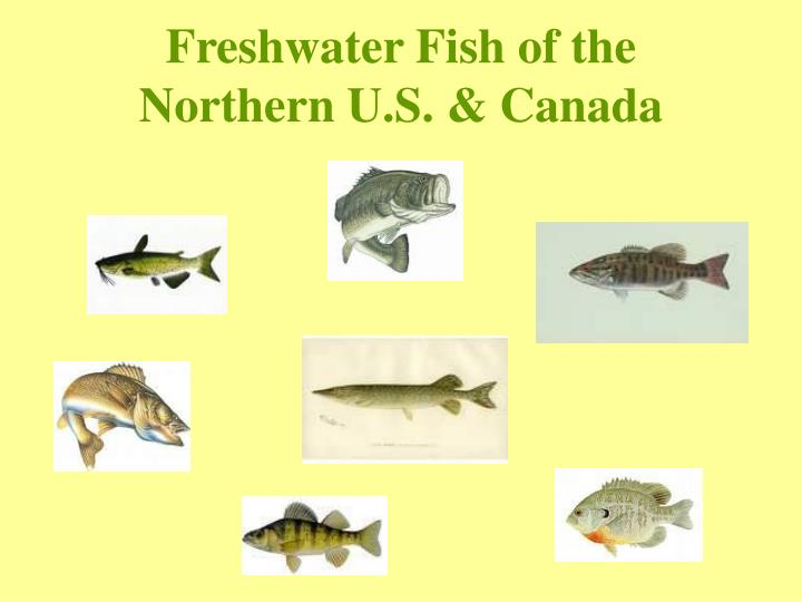 Freshwater fish of the northern u s canada1