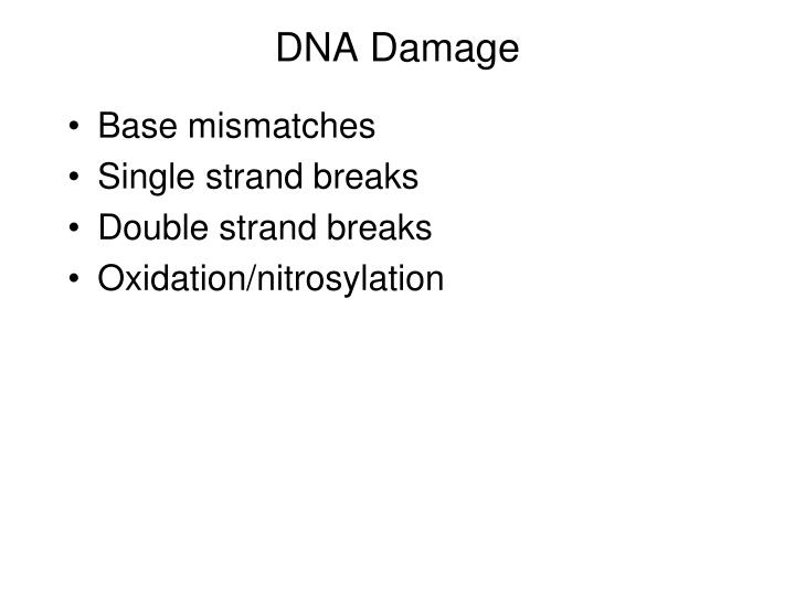 DNA Damage