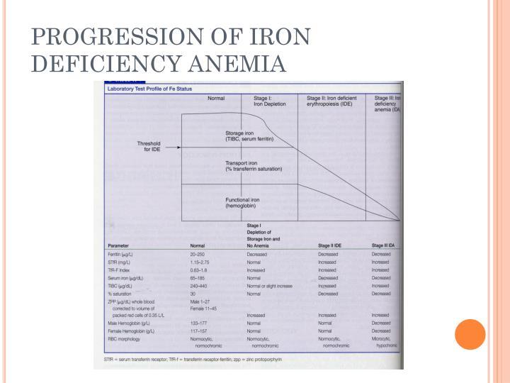 PROGRESSION OF IRON DEFICIENCY ANEMIA