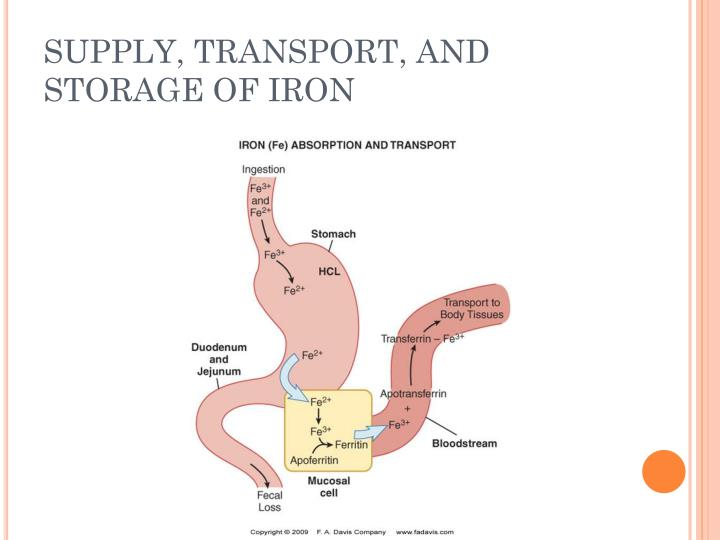 SUPPLY, TRANSPORT, AND STORAGE OF IRON