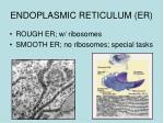 endoplasmic reticulum er1