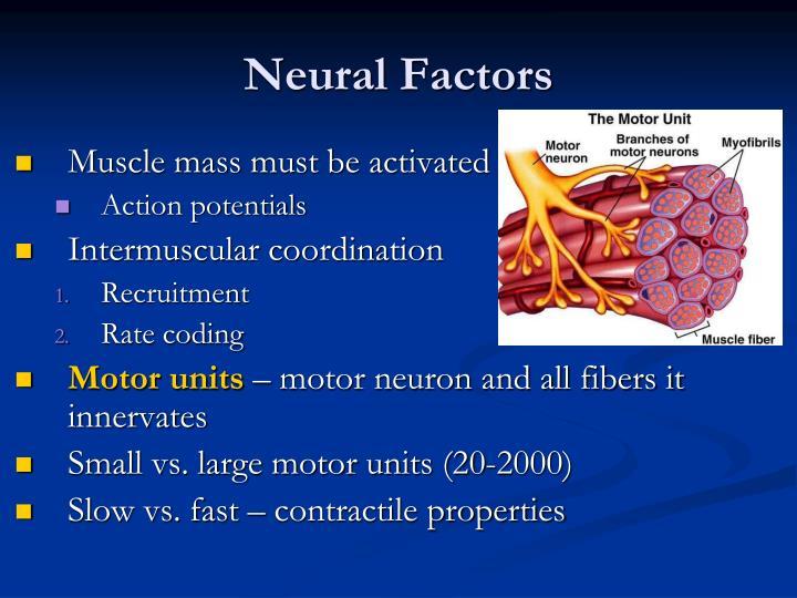 Neural Factors