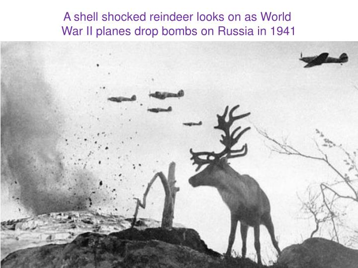 A shell shocked reindeer looks on as World